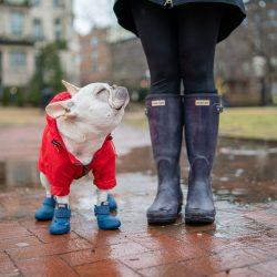 WagWellies Dog Boots