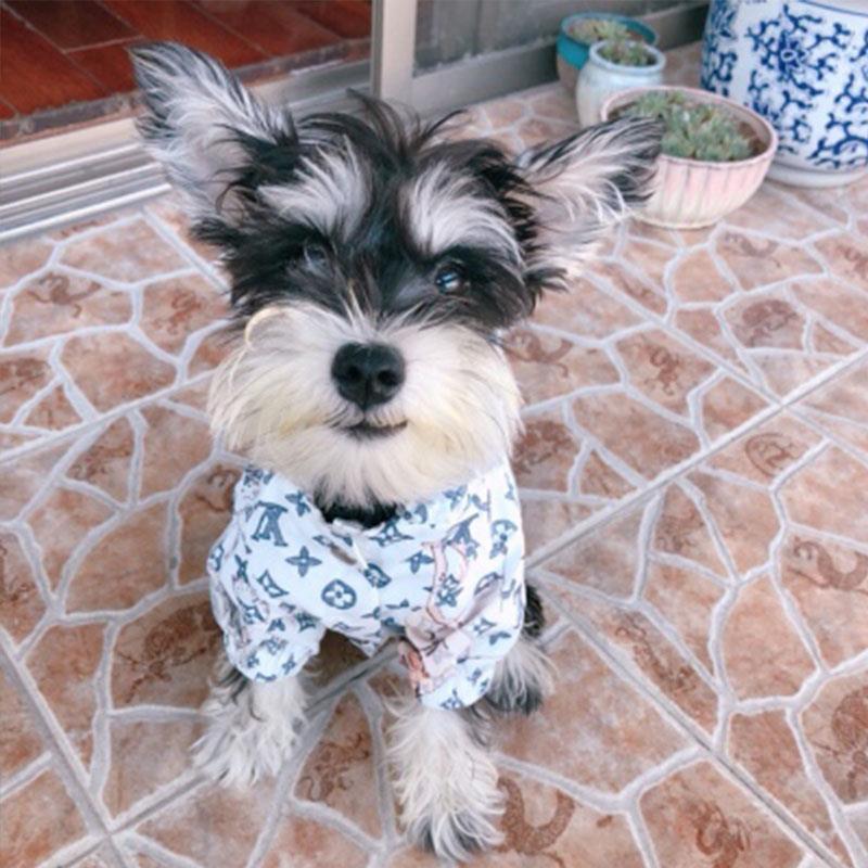 Chewy V Dog Rain Jacket
