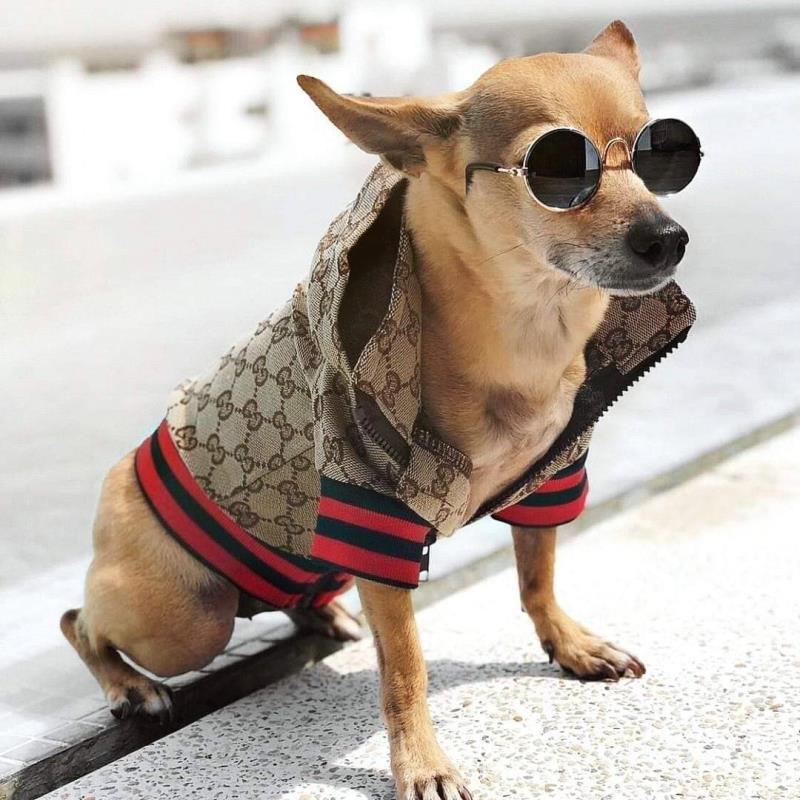 Monogram Print Dog Jacket