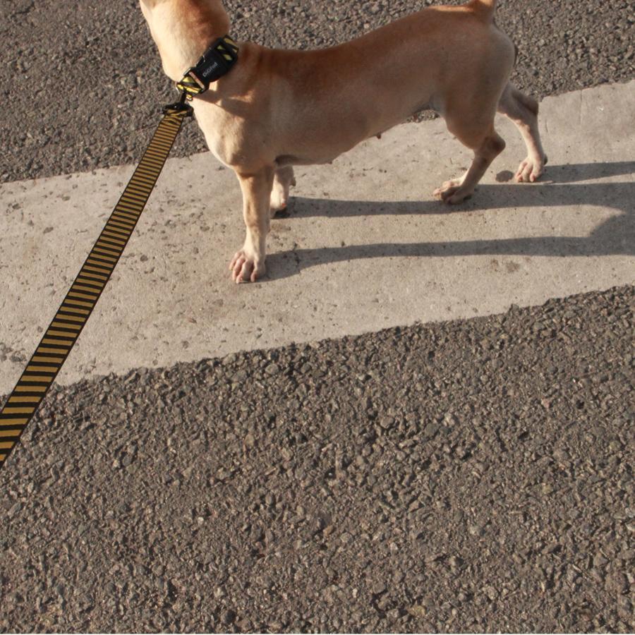 SPS Striped Dog Collar & Leash