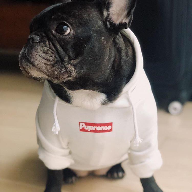 Pupreme Classic Dog Hoodie
