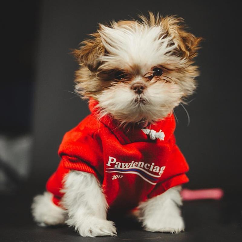 Pawlenciaga Dog Hoodie