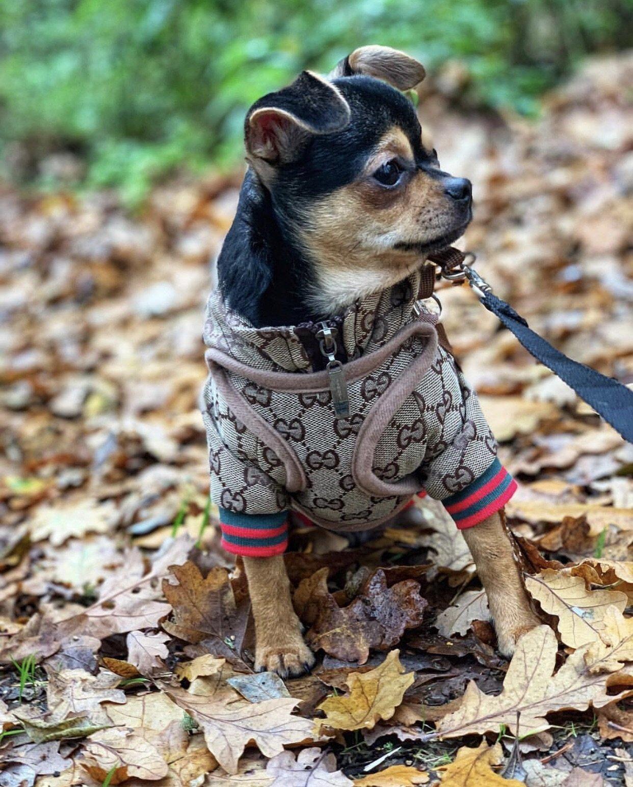 Pucci Print Dog Jacket