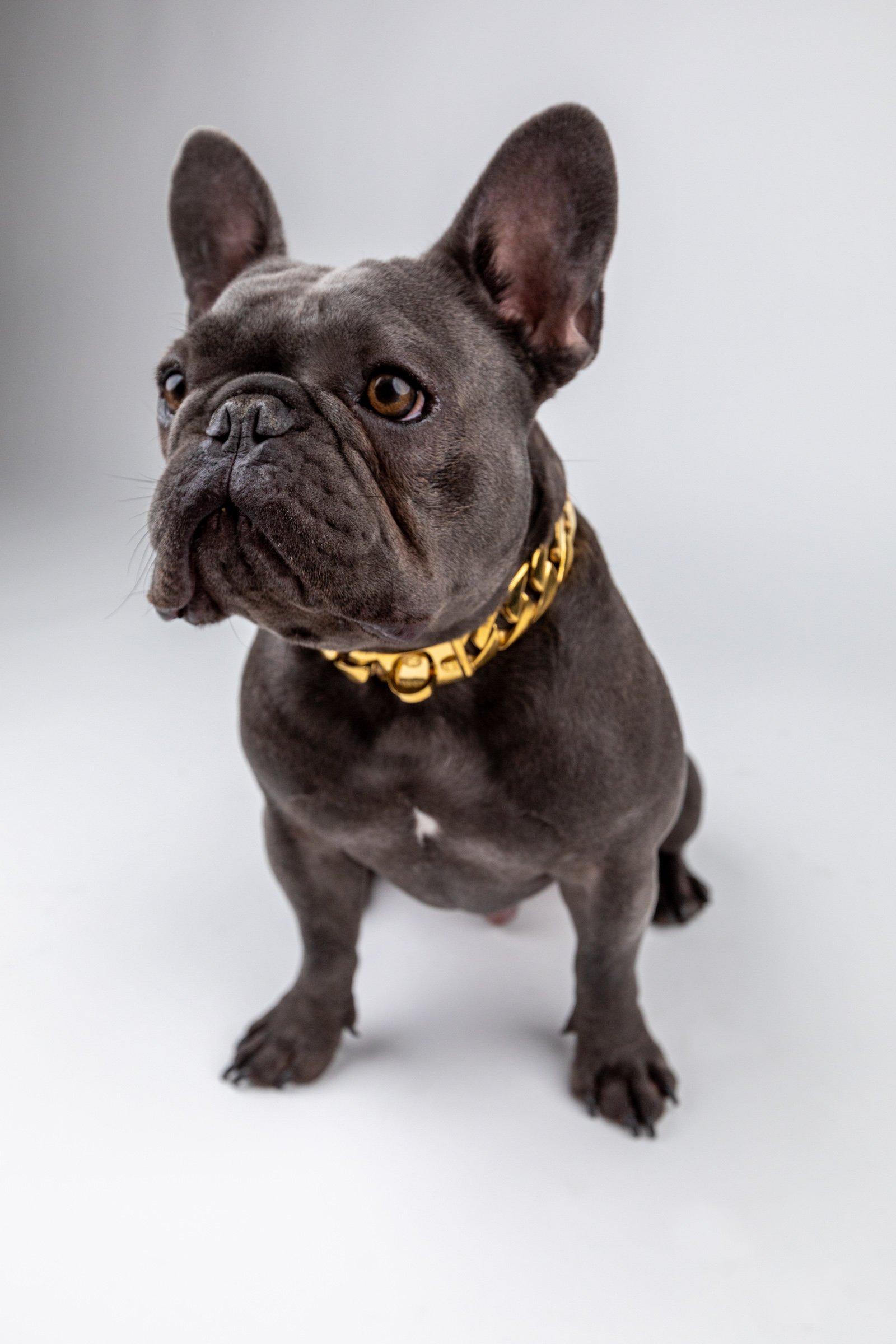 Solid 316L Cuban Link Dog Collar