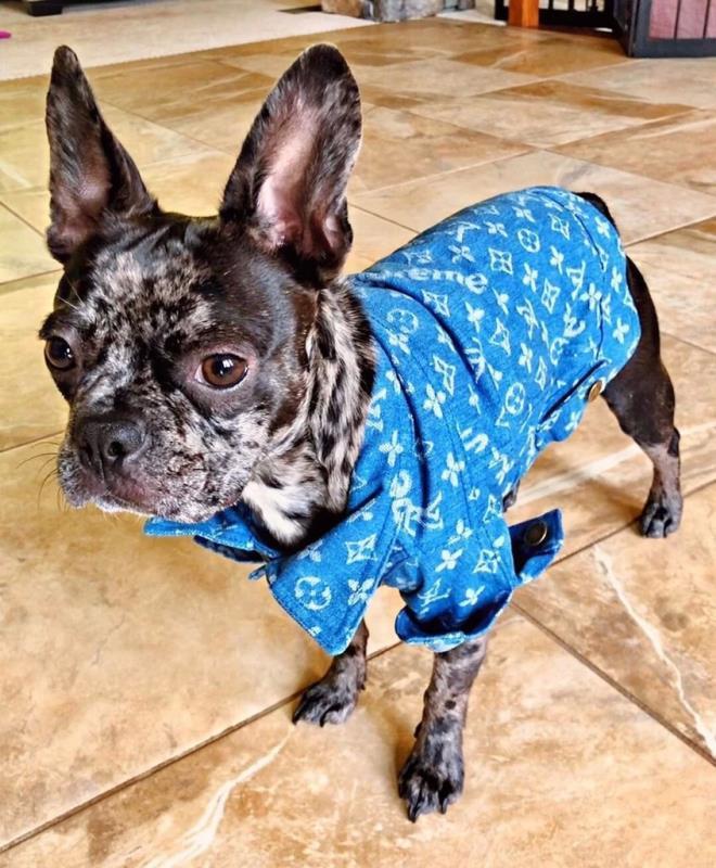 Chewy V Denim Dog Jacket