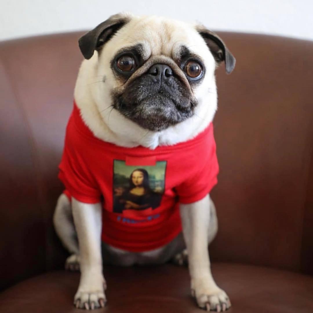 "Da Vinci ""Treats"" Dog Hoodie"