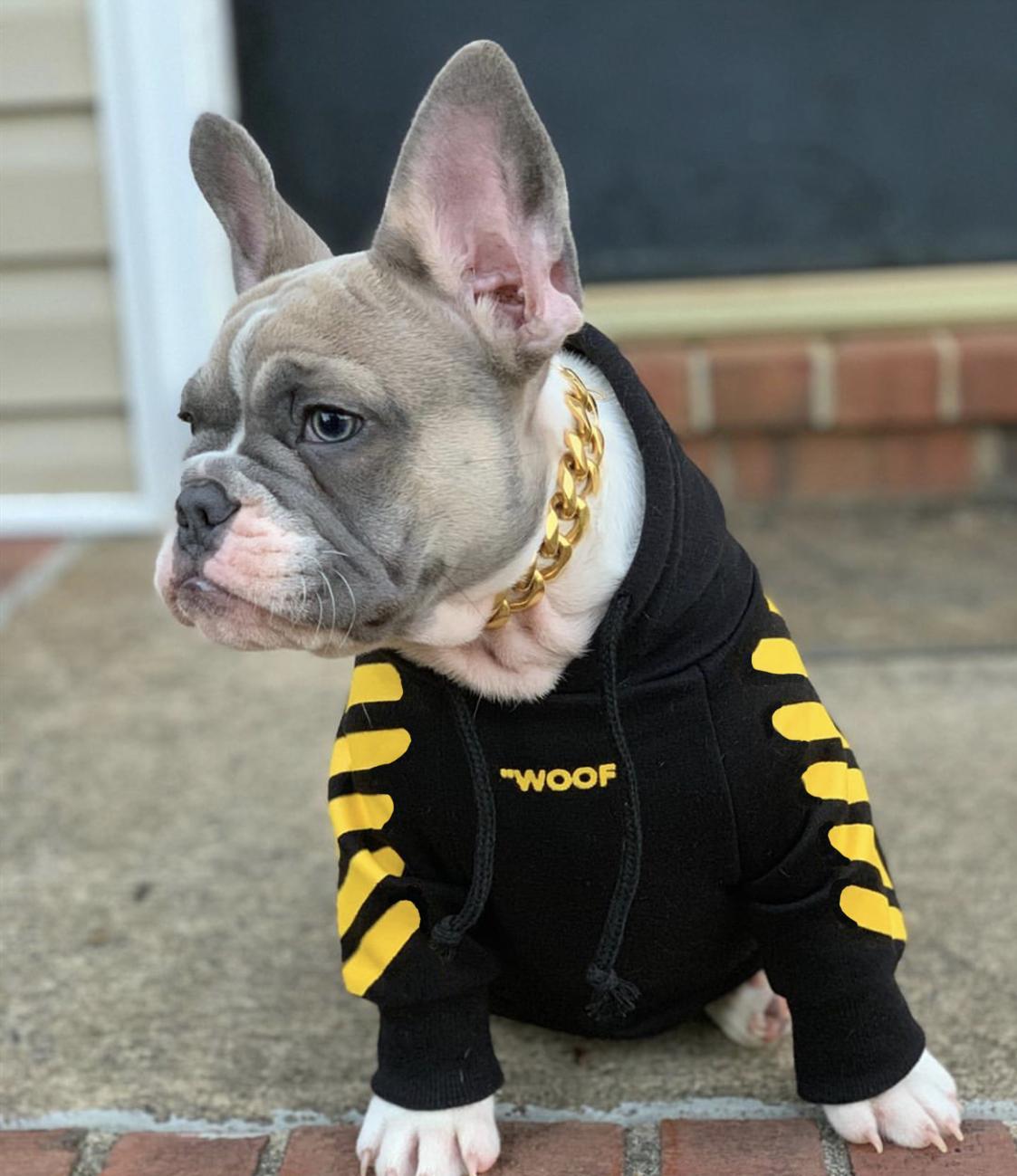"""Woof-White """"Woof"""" Dog Hoodie - Yellow"""
