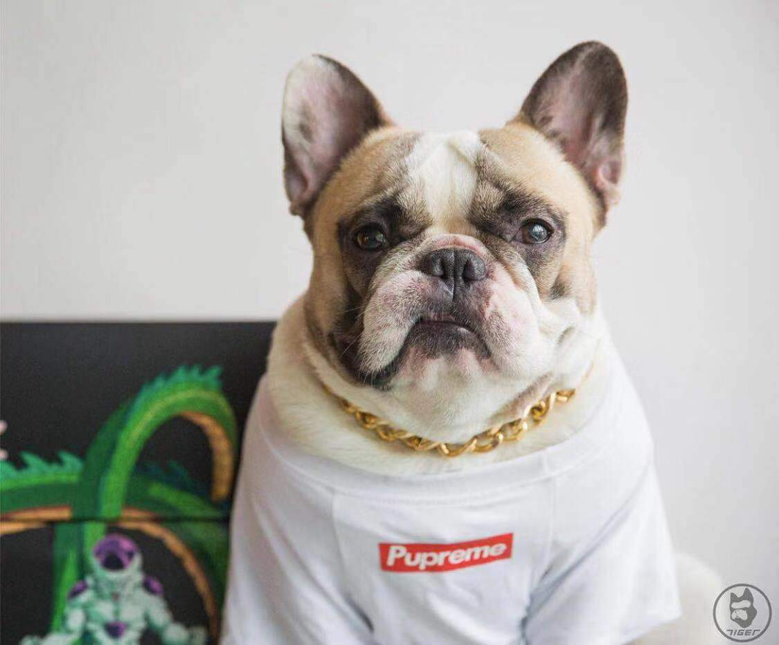 Pupreme Classic Dog Tee - Supreme Paw Supply