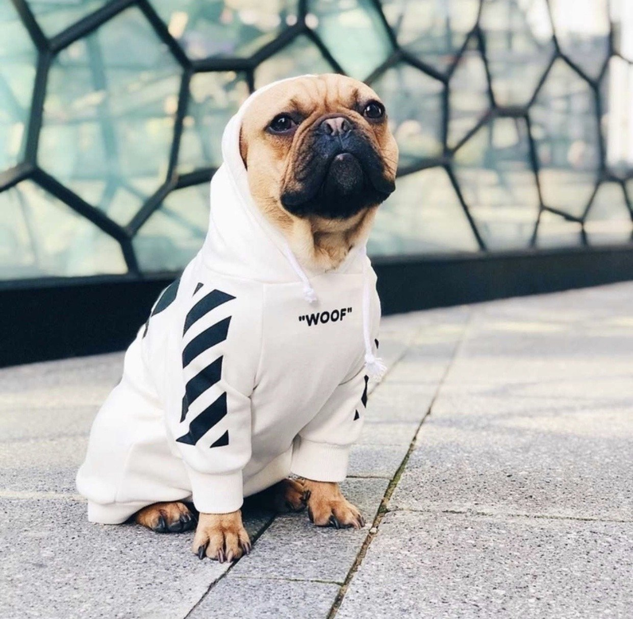 "Woof-White ""Woof"" Dog Hoodie - White - Supreme Paw Supply"