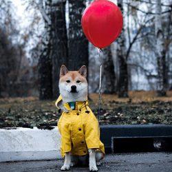 Stratford Dog Jacket