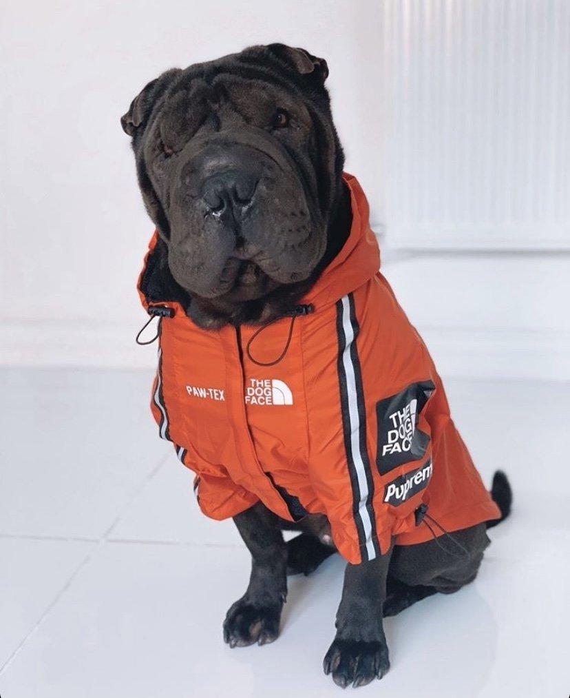 The Dog Face Dog Jacket – Red