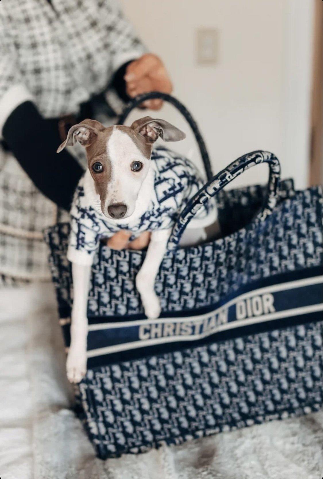Dogior Dog Sweater